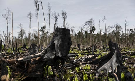Burnt trees in Sumatran forest.Photograph: Kemal Jufri / Greenpeace