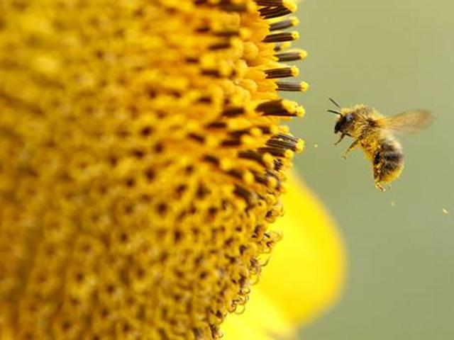 EU bans neonicotinoids bees news