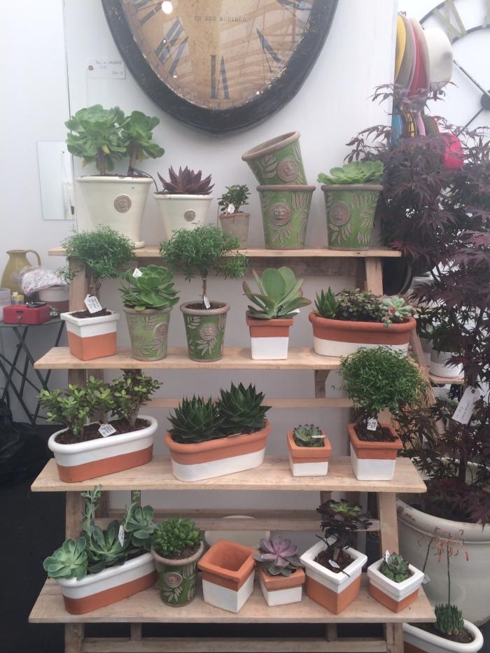 Succulents at GROW London Fair