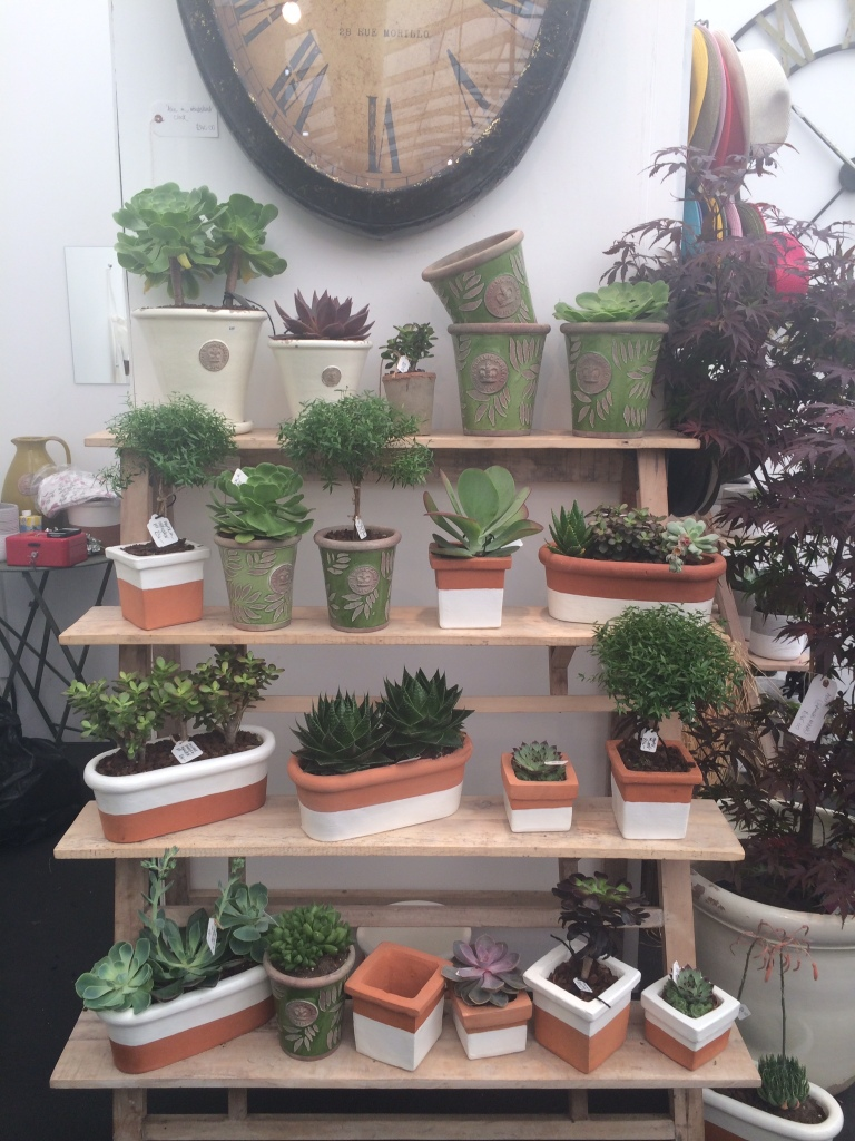 Succulents at GROW London Fair
