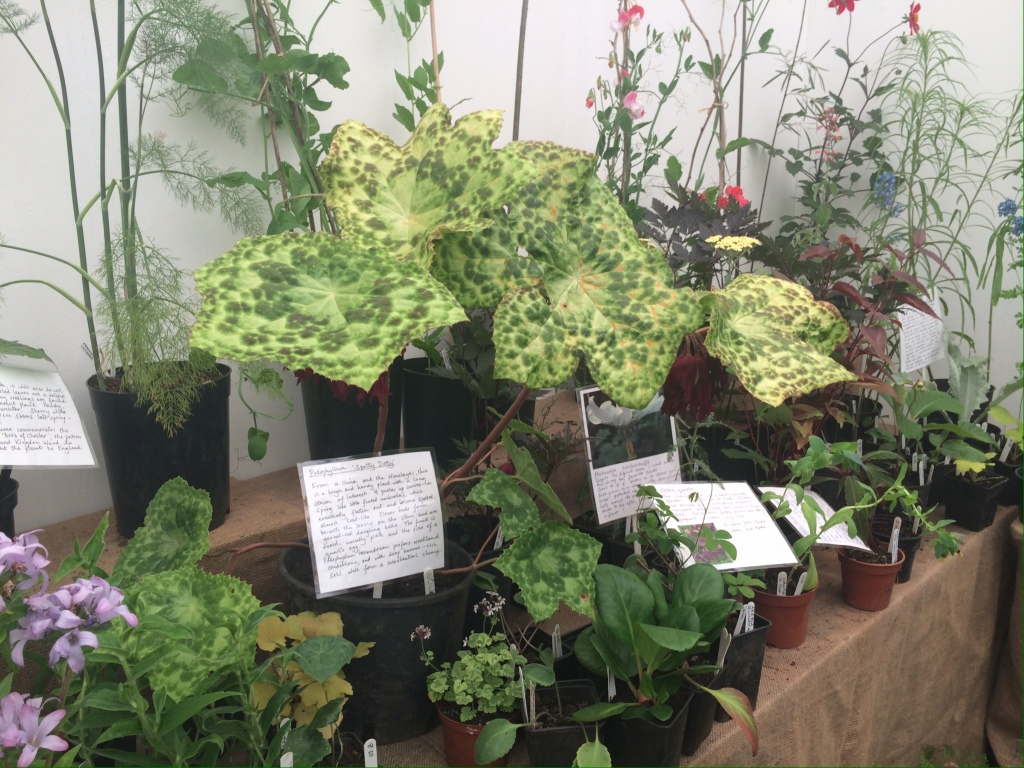 Wow-plants at GROW London
