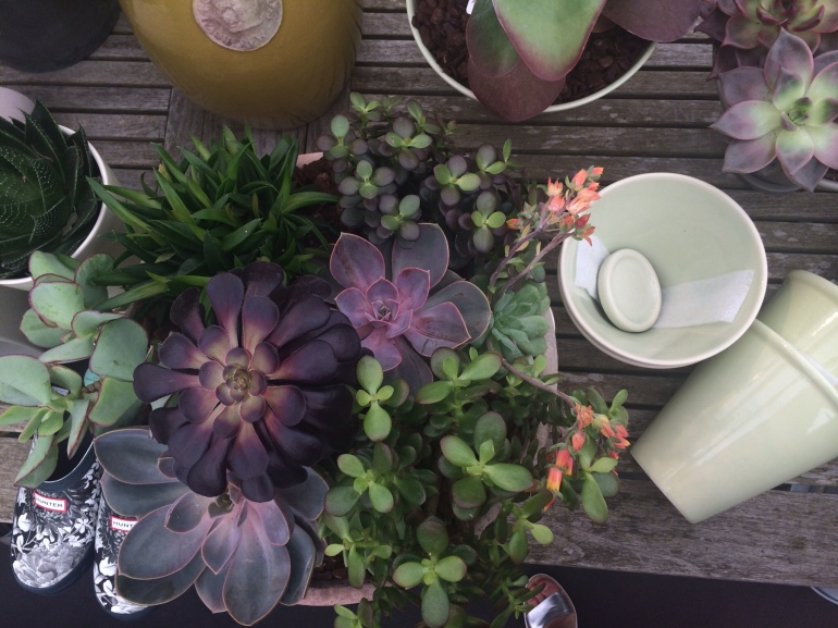 Succulents and inspiration at GROW London