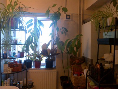 how to grow avocado plants