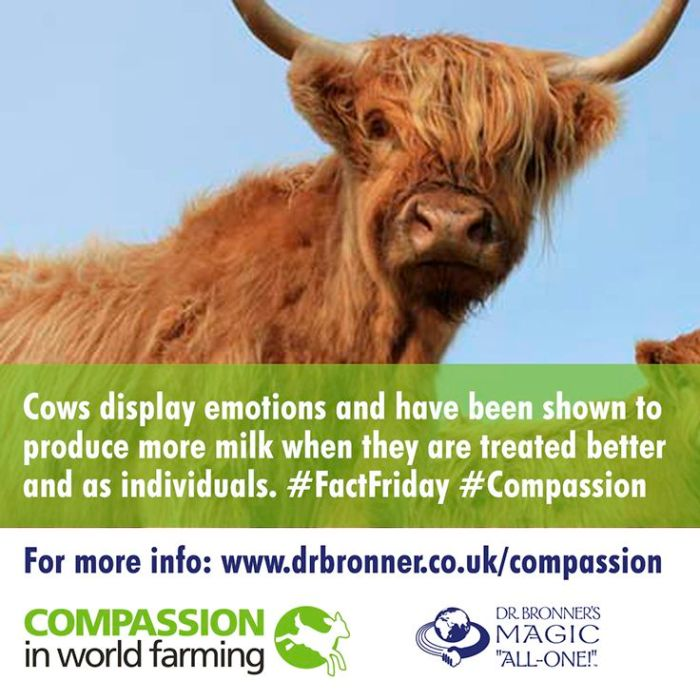 dr bronners campaigning compassion farming