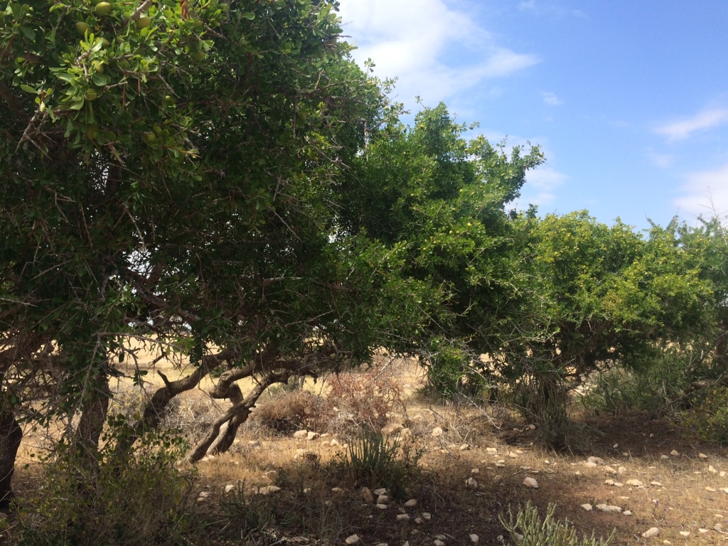 how fairtrade organic argan oil forest is made in morocco weleda