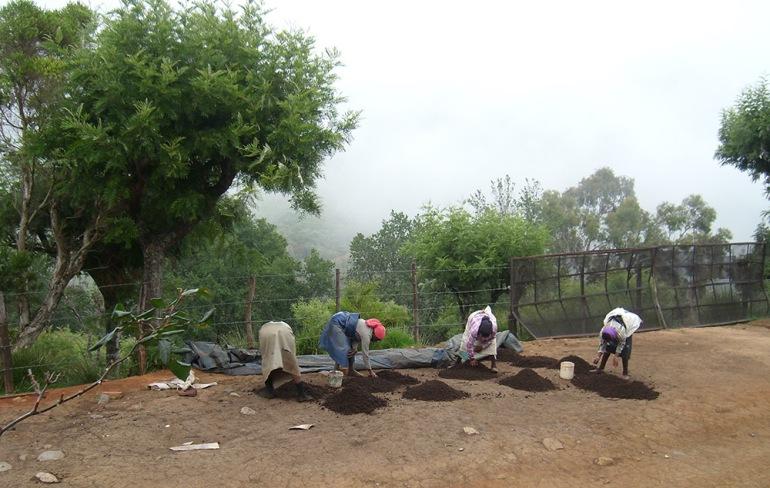 clipper teas organic farming india tea plantations workers