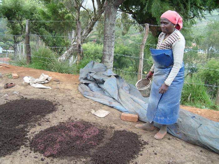 clipper teas organic farming india tea workers